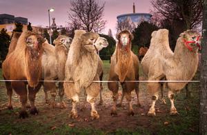 Tierisch gut - Circus Maximum organisiert Safariland am Niederrhein