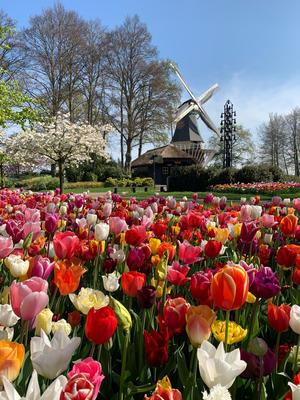 Keukenhof not permitted to open on 20 March
