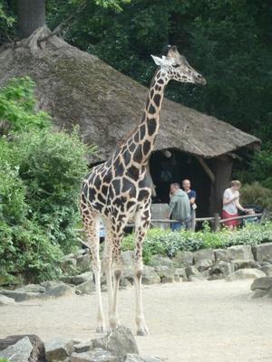 Erlebnis-Zoo Hannover öffnet ab Samstag  für Jahreskartenbesitzer