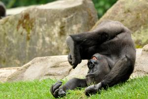 Inzidenz stabil unter 100: Ende der Testpflicht im Erlebnis-Zoo