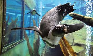 Erlebnis-Zoo öffnet seine Unterwasserwelt