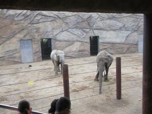 An- und Abfahrten zum und vom Opel-Zoo am 19. September