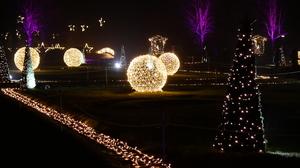 Endlich wieder! Weihnachten im Tierpark sorgt für tierischen Lichterglanz
