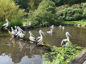 Weltvogelpark öffnet am Freitag