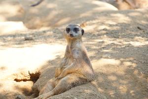 Zoo Duisburg ab Samstag wieder geöffnet