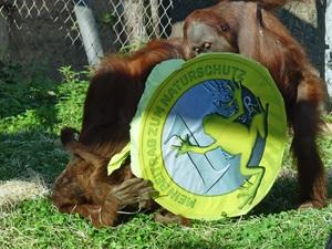 Sechs Monate freiwilliger Naturschutz-Euro: Der Zoo zieht eine positive Bilanz