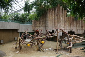 Affenhaus im Zoo Krefeld niedergebrannt