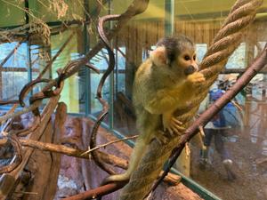 Ab Donnerstag: Keine Reservierungspflicht im Zoo Osnabrück