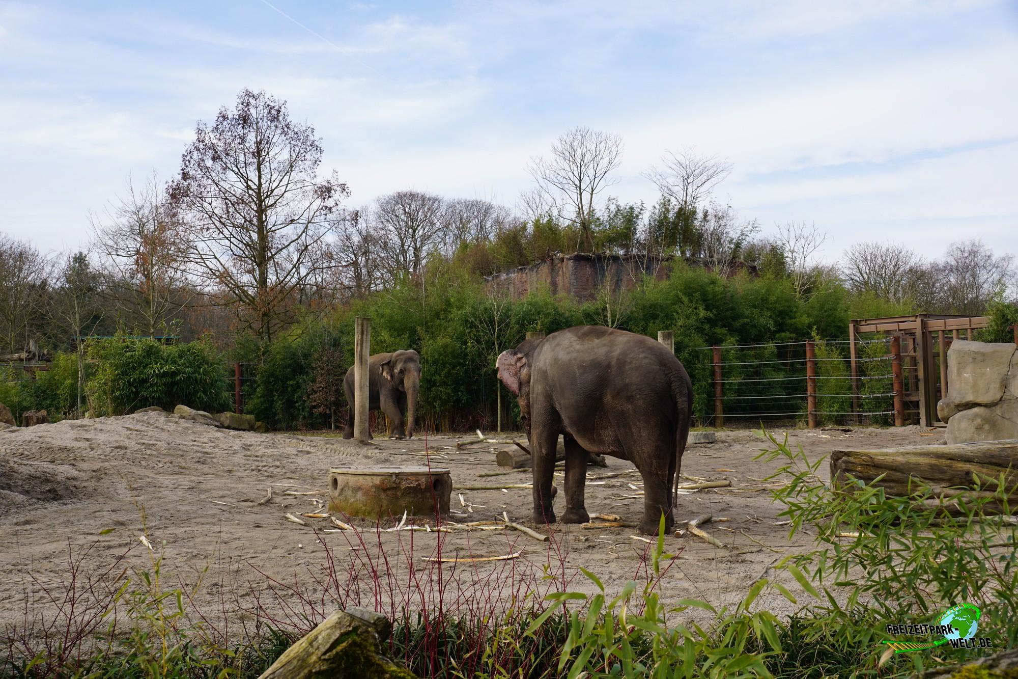 elefanten park allwetterzoo m nster freizeitpark. Black Bedroom Furniture Sets. Home Design Ideas