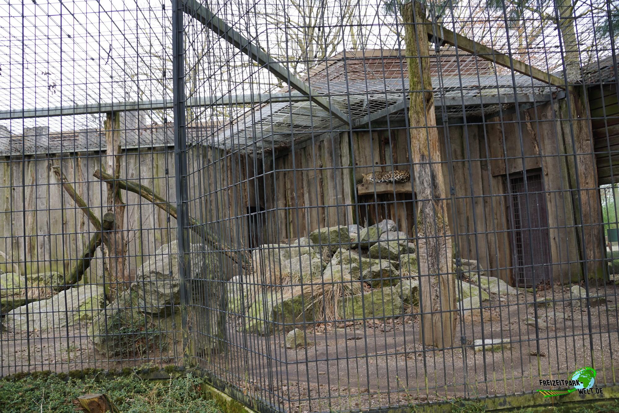 persischer leopard allwetterzoo m nster freizeitpark. Black Bedroom Furniture Sets. Home Design Ideas