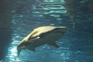 Teaserfoto Aquarium Barcelona