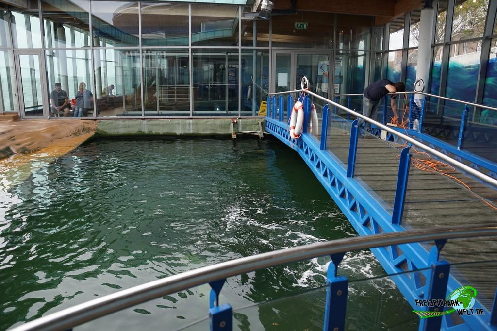 Seehunde im Aquarium Wilhelmshaven - 2018: Das Seehund-Becken kann sowohl von unten als auch von oben entdeckt werden.