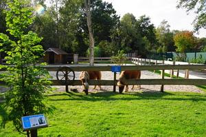 Teaserfoto Birgit's Tiergarten