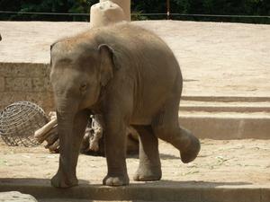 Coronablog Mai: Zoos, Museen und Botanische G�rten d�rfen wieder �ffnen | Freizeitparks folgen im Laufe des Monats