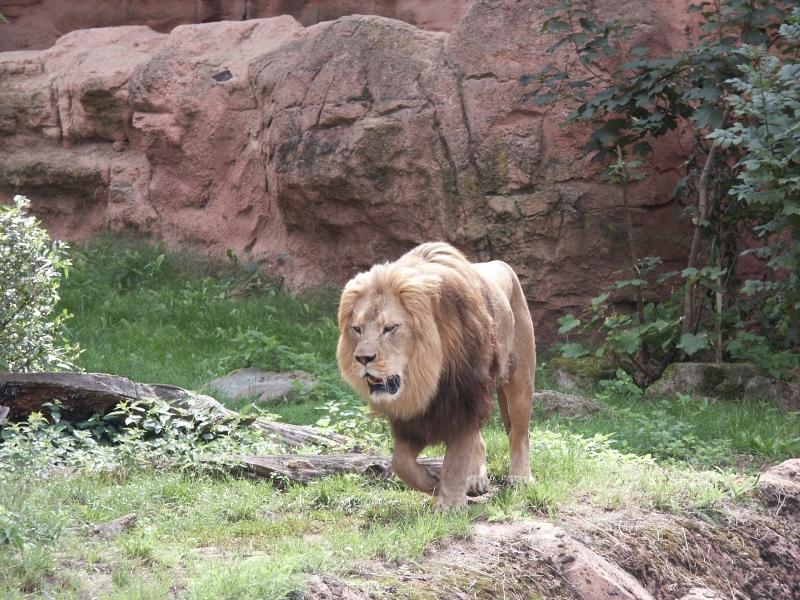 berberl we erlebnis zoo hannover freizeitpark. Black Bedroom Furniture Sets. Home Design Ideas