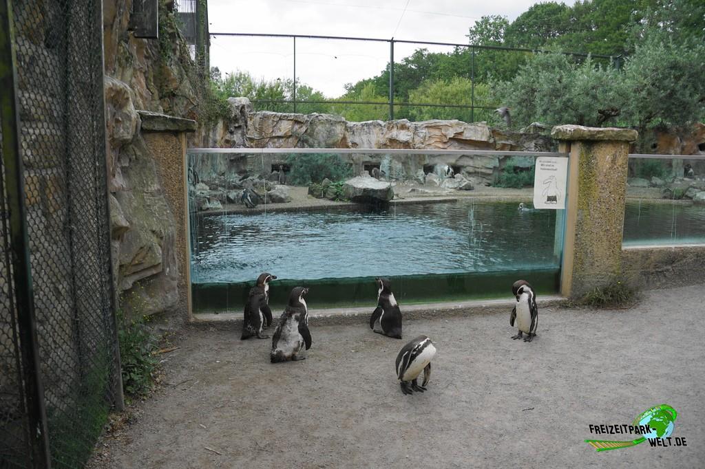 Zoo Rheine Corona