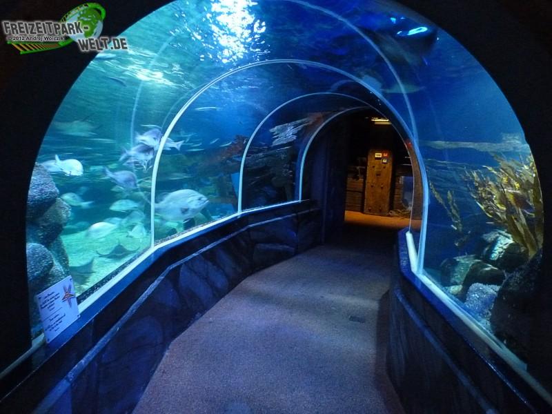 foto galerien aquadom sea life berlin freizeitpark. Black Bedroom Furniture Sets. Home Design Ideas
