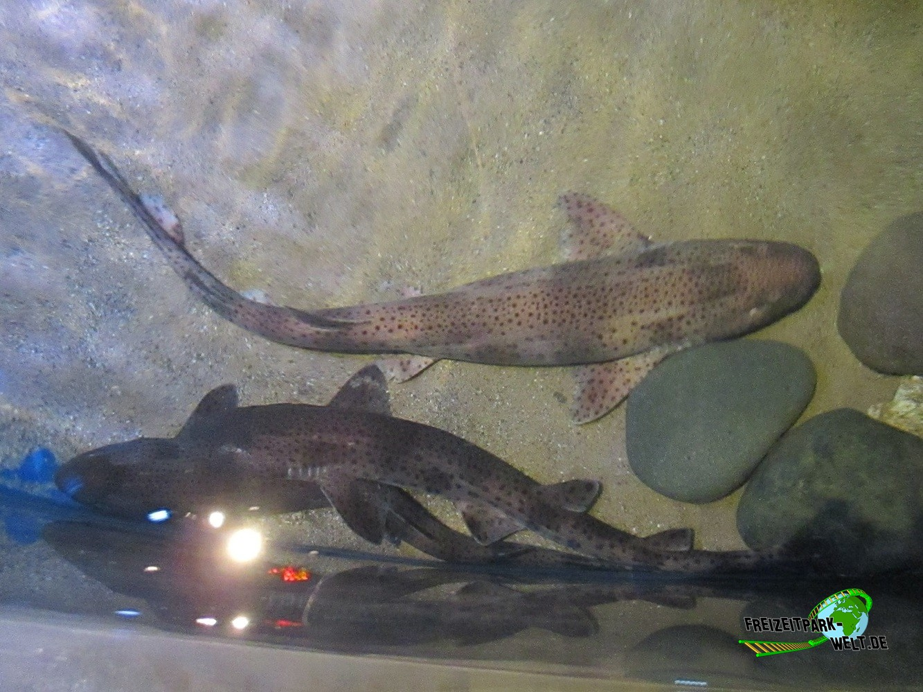 Sea Life Centre K?nigswinter : Weitere Foto-Shows aus dem SEA LIFE K?nigswinter