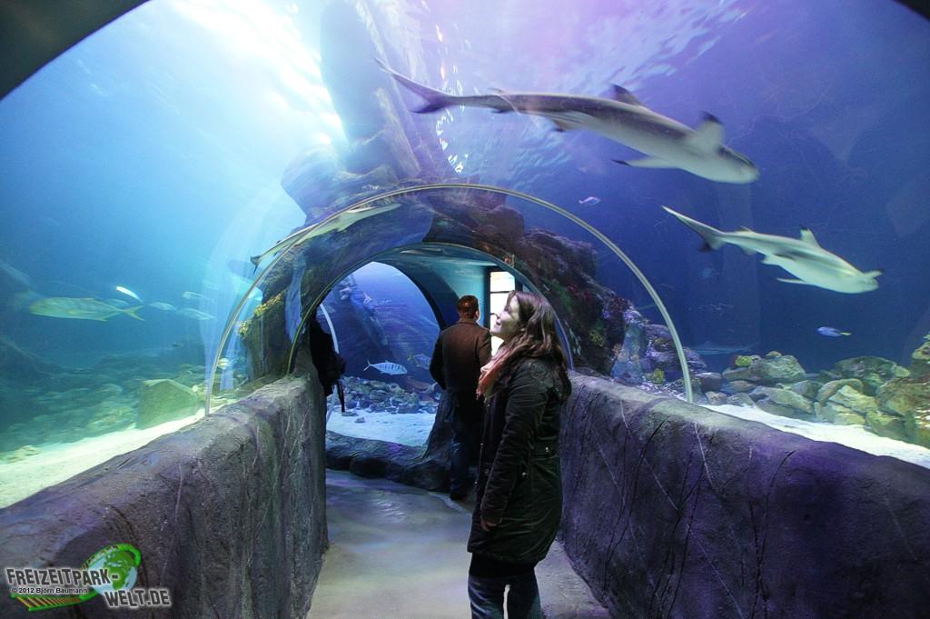 sea life oberhausen highlights tipps zum besuch im aquarium. Black Bedroom Furniture Sets. Home Design Ideas