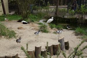 Tierpark + Fossilium Bochum - Galerie 2012