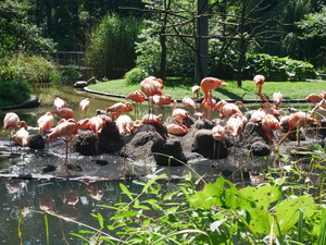 Teaserfoto Tierpark Cottbus