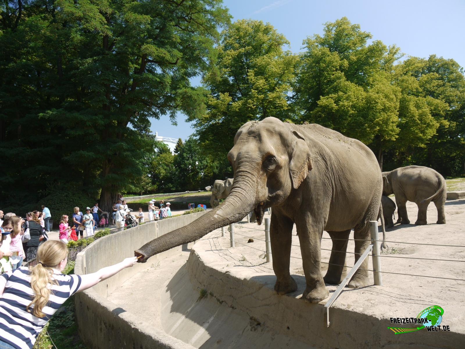 elefanten anlage tierpark hagenbeck freizeitpark. Black Bedroom Furniture Sets. Home Design Ideas