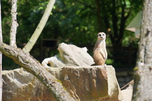 Teaserfoto Tierpark Hamm
