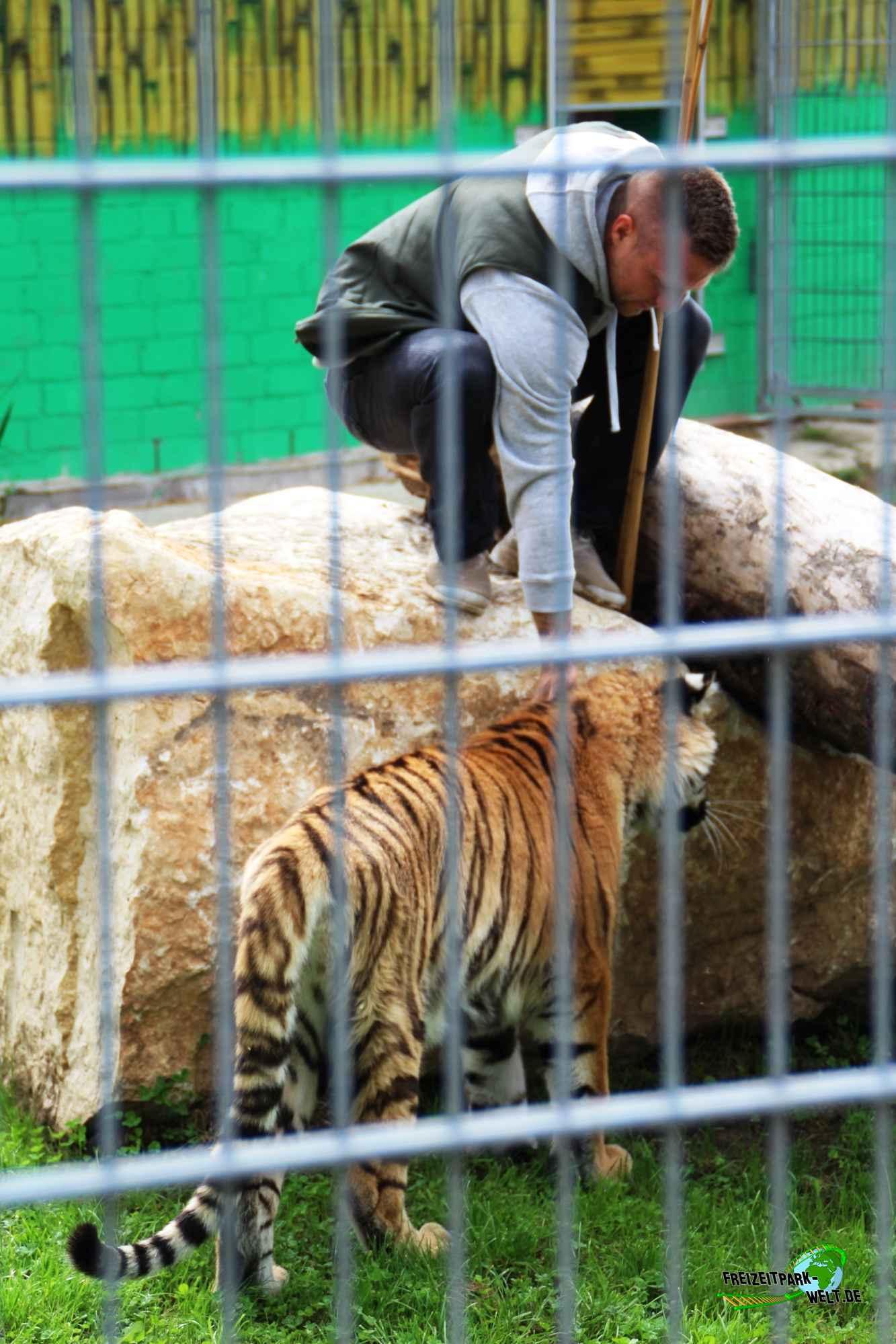 sibirischer tiger erlebnis und tigerpark dassow freizeitpark. Black Bedroom Furniture Sets. Home Design Ideas
