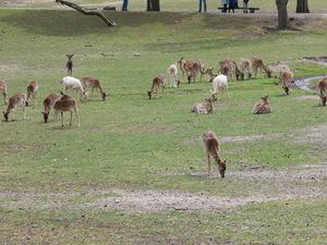Teaserfoto Wildpark Johannismühle