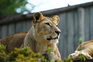 Teaserfoto Zoo d'Amneville