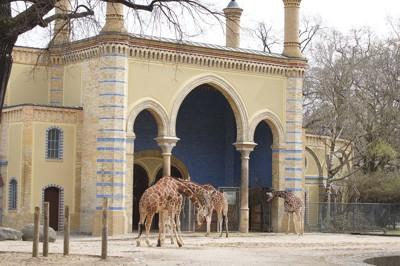 Teaserfoto Zoo Berlin
