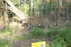 zoo dortmund meinungen zum park. Black Bedroom Furniture Sets. Home Design Ideas