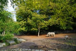 Teaserfoto Zoo Dortmund
