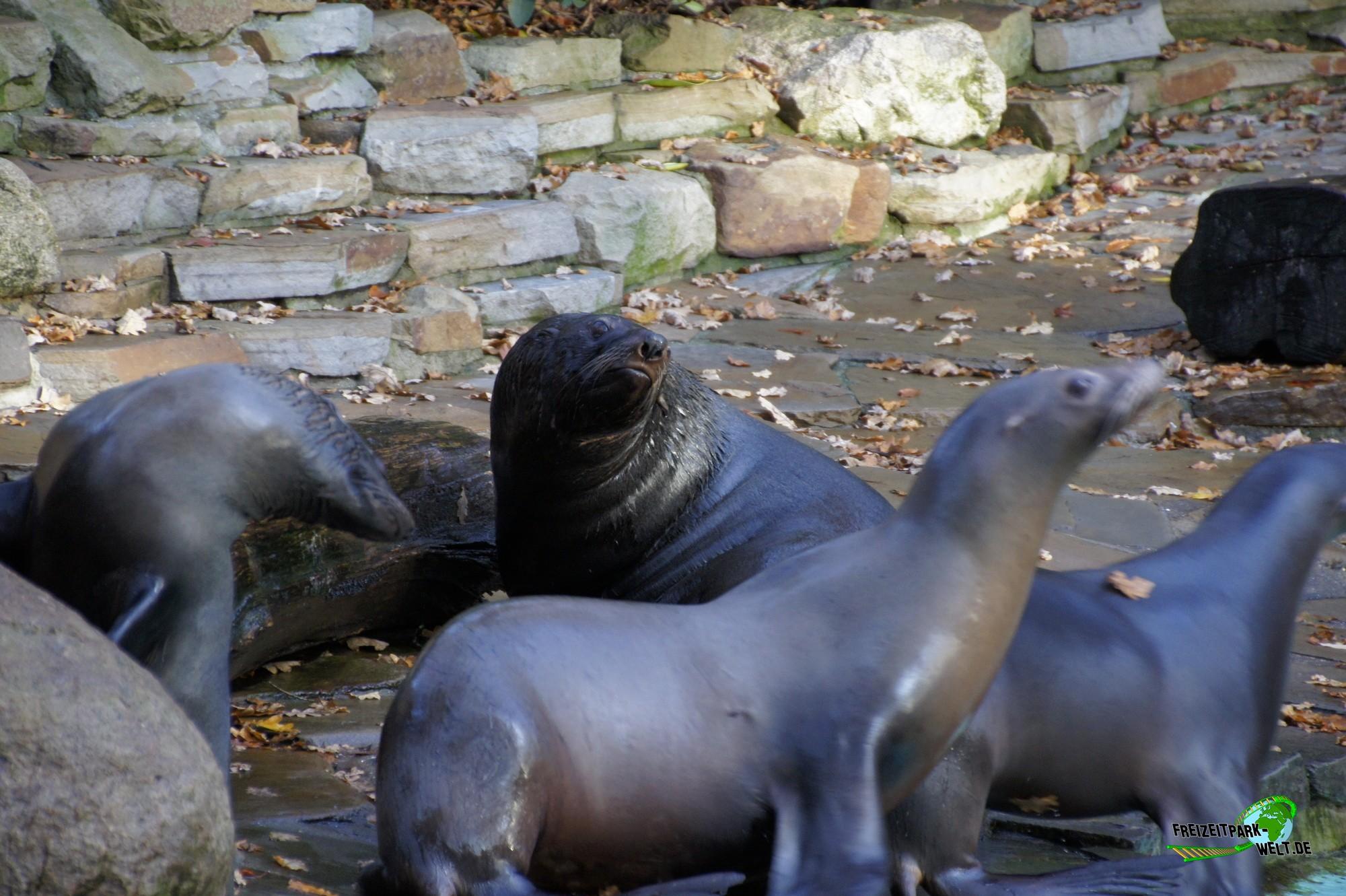 kalifornischer seel we zoo dortmund freizeitpark. Black Bedroom Furniture Sets. Home Design Ideas