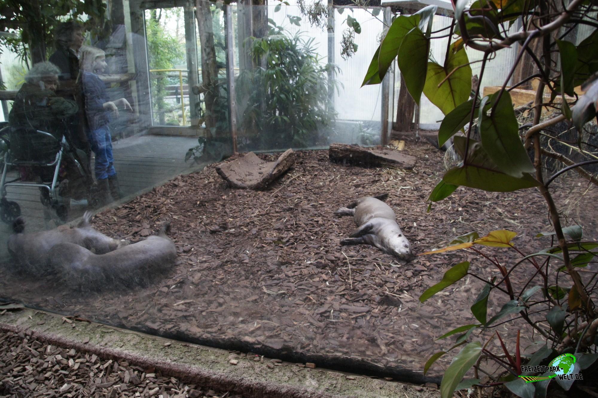 riesenotter zoo dortmund freizeitpark. Black Bedroom Furniture Sets. Home Design Ideas