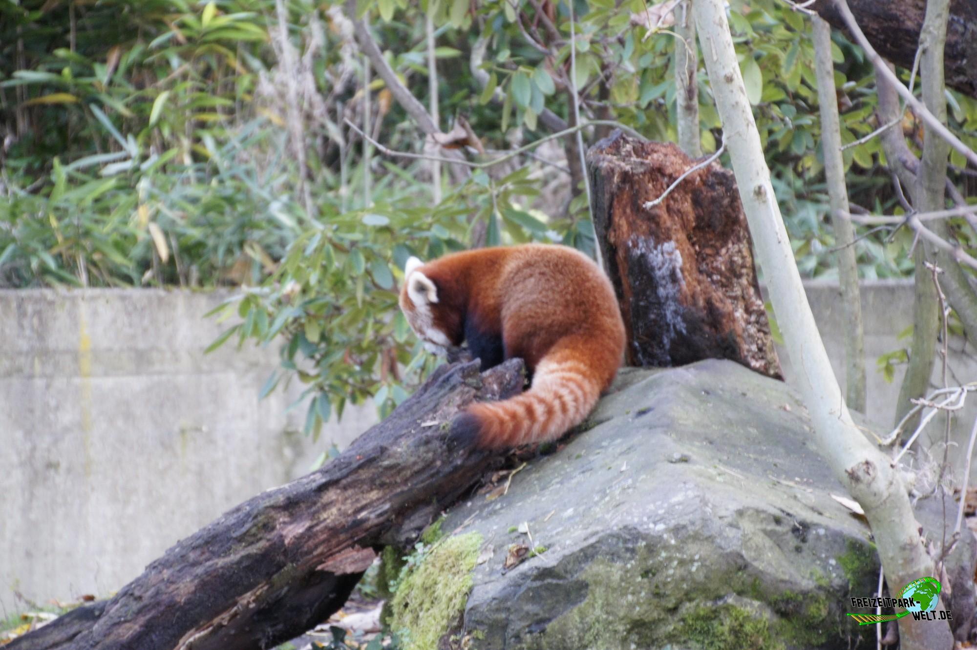 kleiner panda zoo dortmund freizeitpark. Black Bedroom Furniture Sets. Home Design Ideas