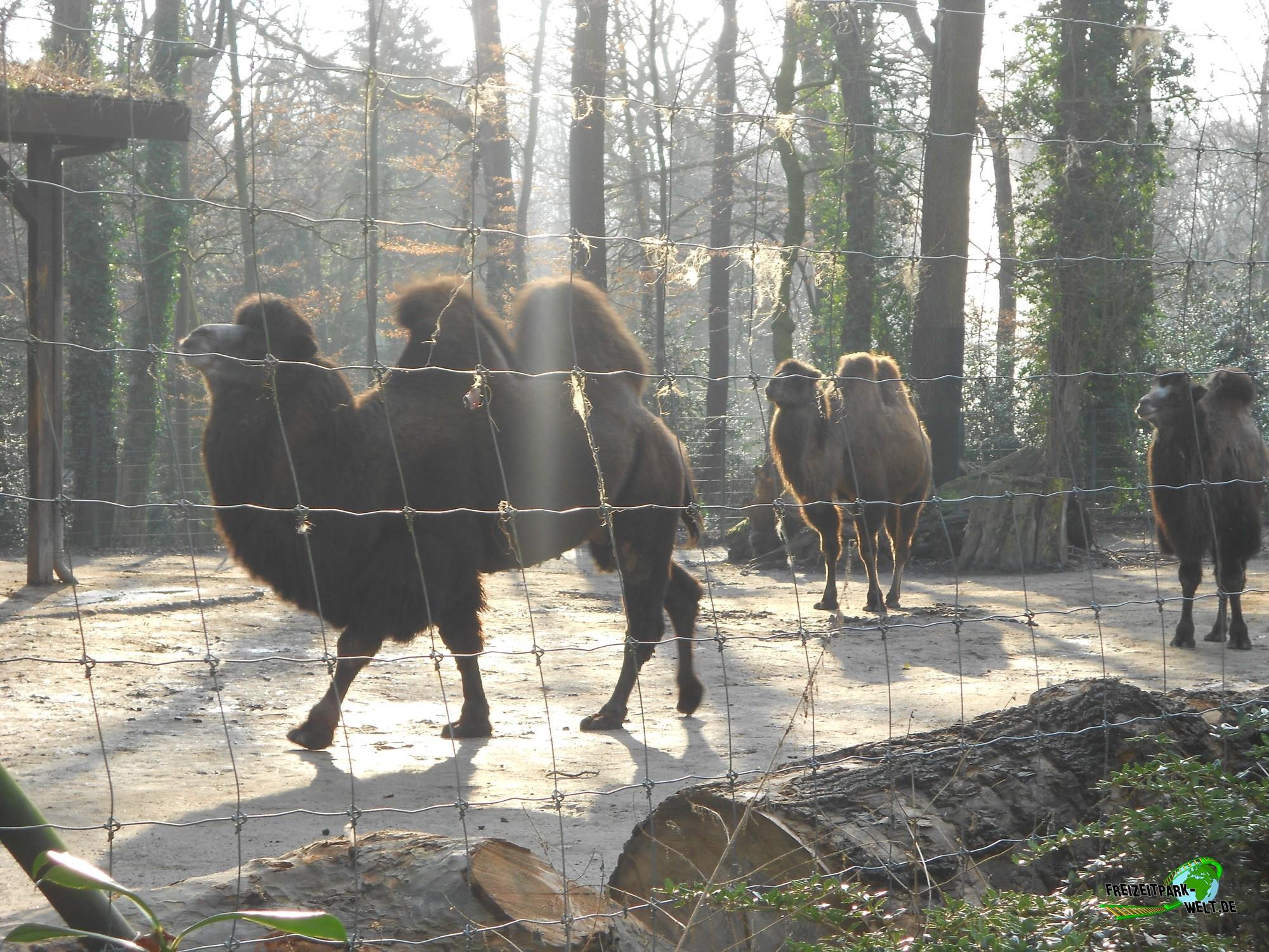 trampeltier zoo dortmund freizeitpark. Black Bedroom Furniture Sets. Home Design Ideas