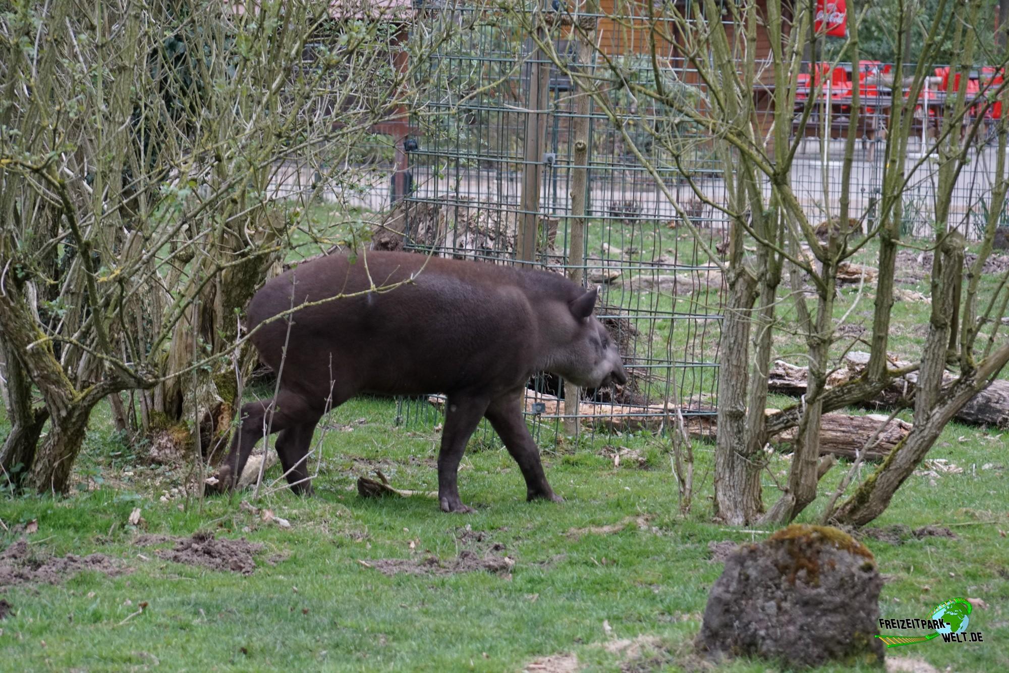 wasserschwein zoo dortmund freizeitpark. Black Bedroom Furniture Sets. Home Design Ideas