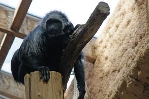 image upload form zoo frankfurt freizeitpark. Black Bedroom Furniture Sets. Home Design Ideas