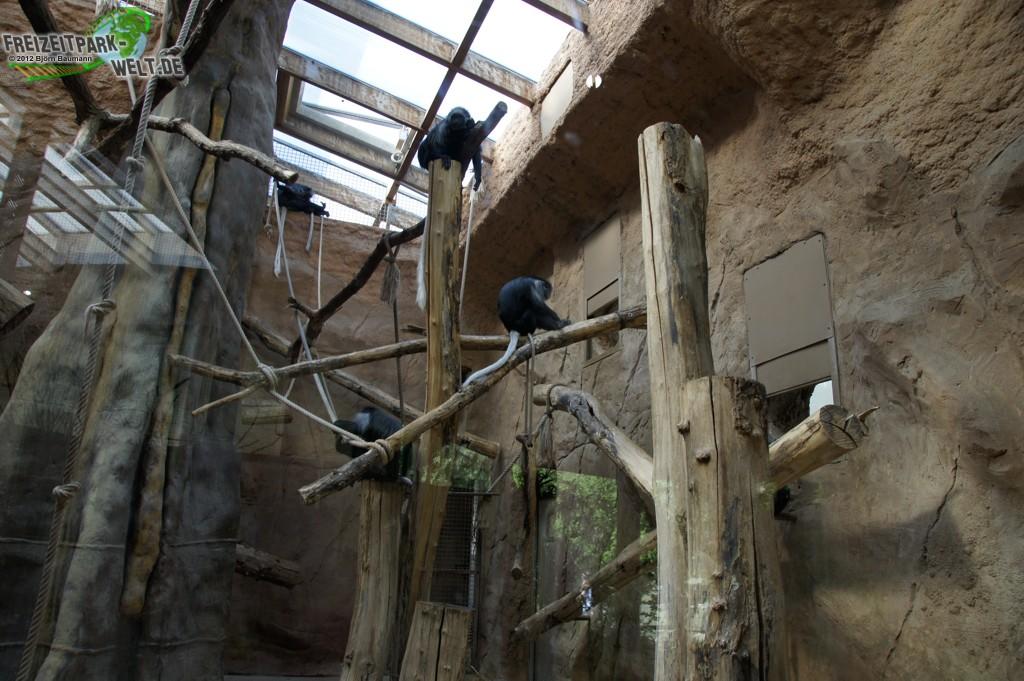 b renstummelaffe zoo duisburg freizeitpark. Black Bedroom Furniture Sets. Home Design Ideas