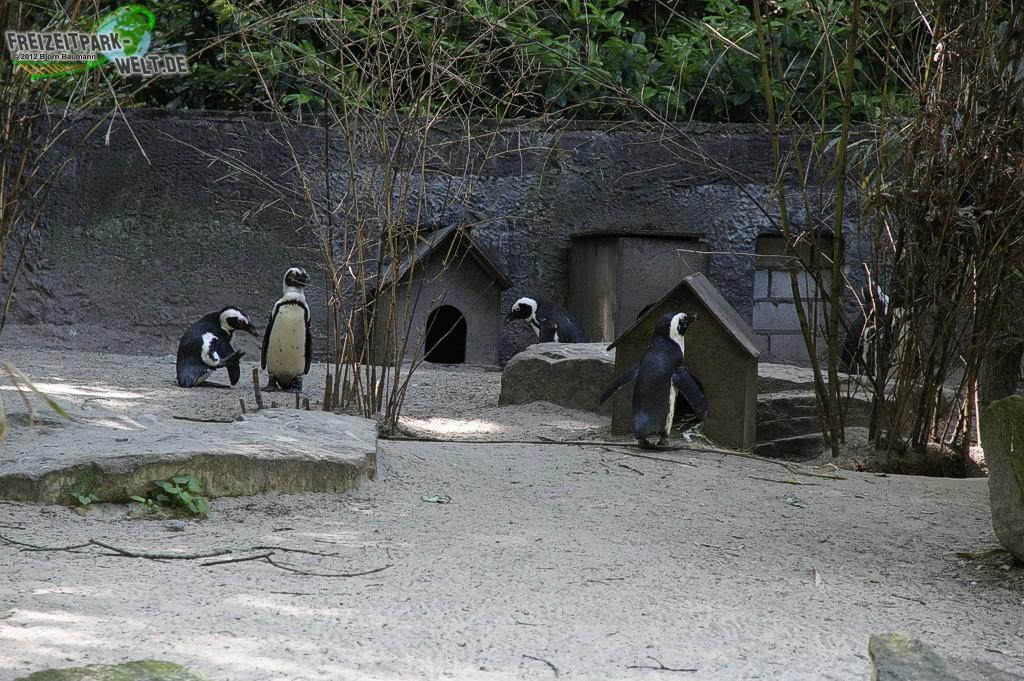 brillenpinguine zoo duisburg freizeitpark. Black Bedroom Furniture Sets. Home Design Ideas