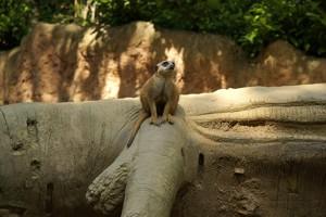 tiere attraktionen im zoo duisburg freizeitpark. Black Bedroom Furniture Sets. Home Design Ideas