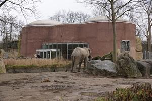 elefanten zoo duisburg freizeitpark. Black Bedroom Furniture Sets. Home Design Ideas
