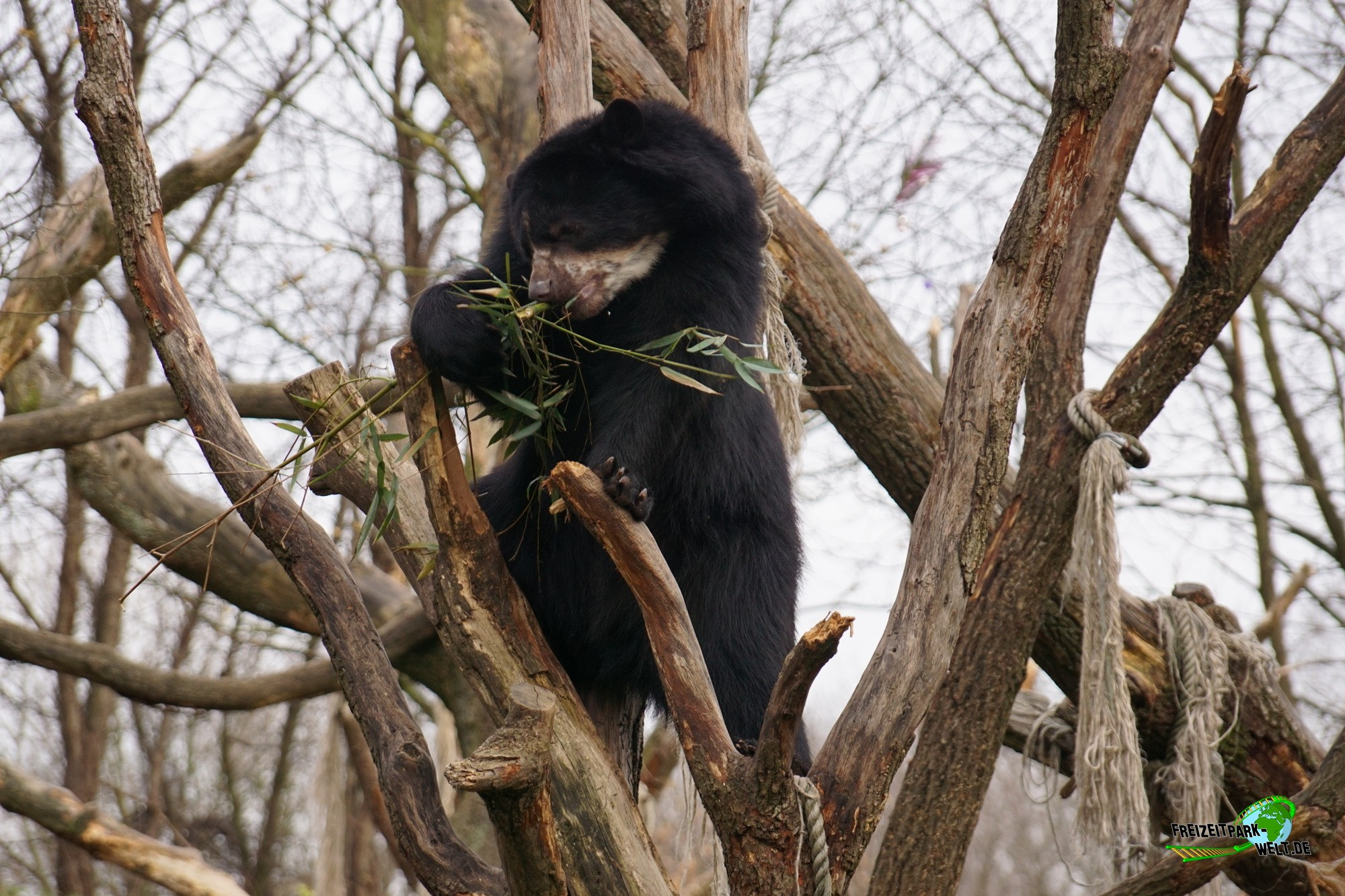 brillenb ren zoo duisburg freizeitpark. Black Bedroom Furniture Sets. Home Design Ideas