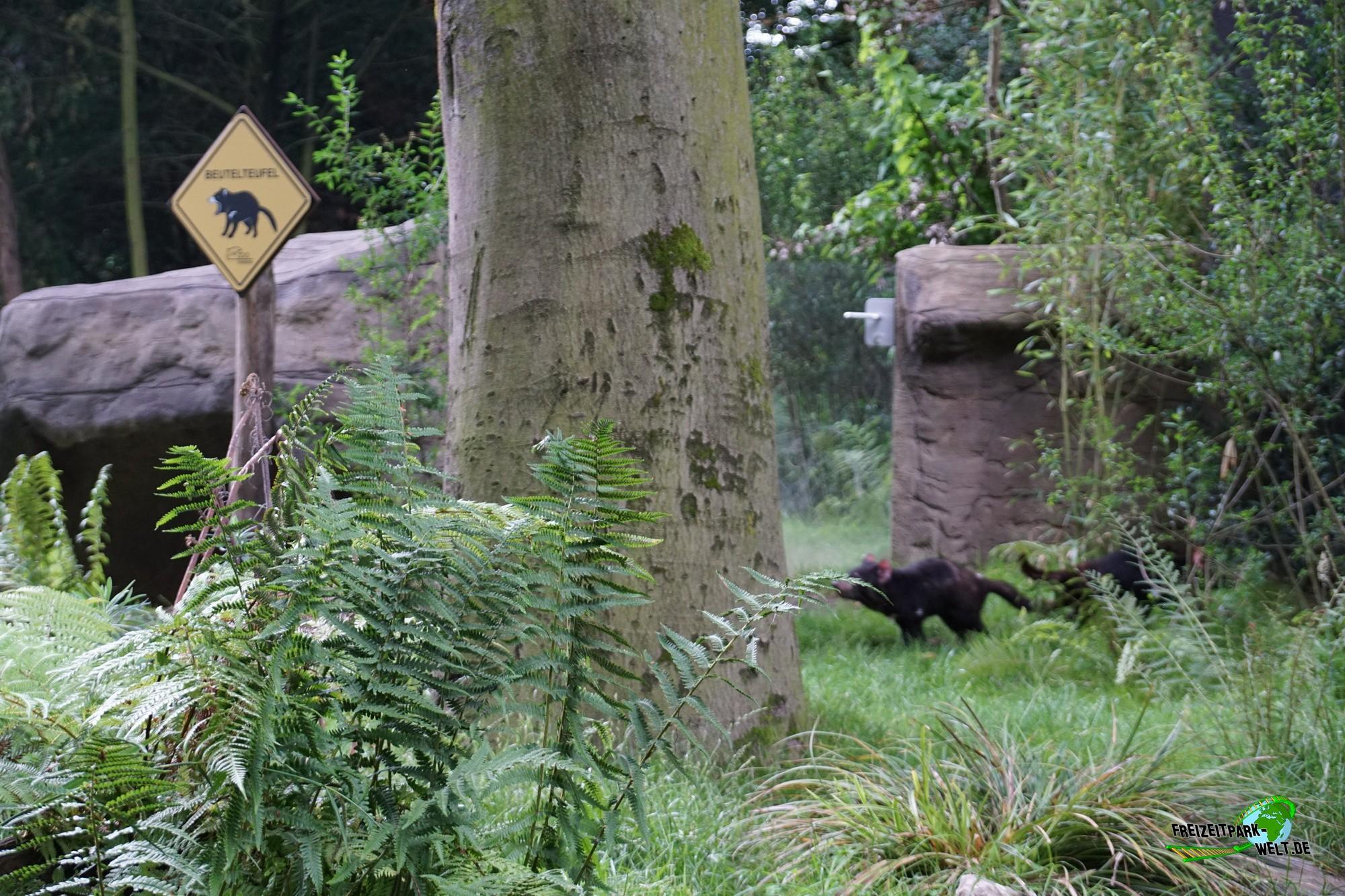 beutelteufel zoo duisburg freizeitpark. Black Bedroom Furniture Sets. Home Design Ideas