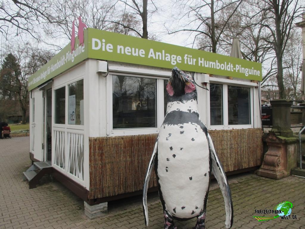 Zoo Frankfurt Pinguine