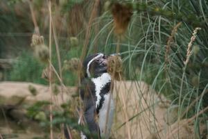 Teaserfoto Zoo Krefeld