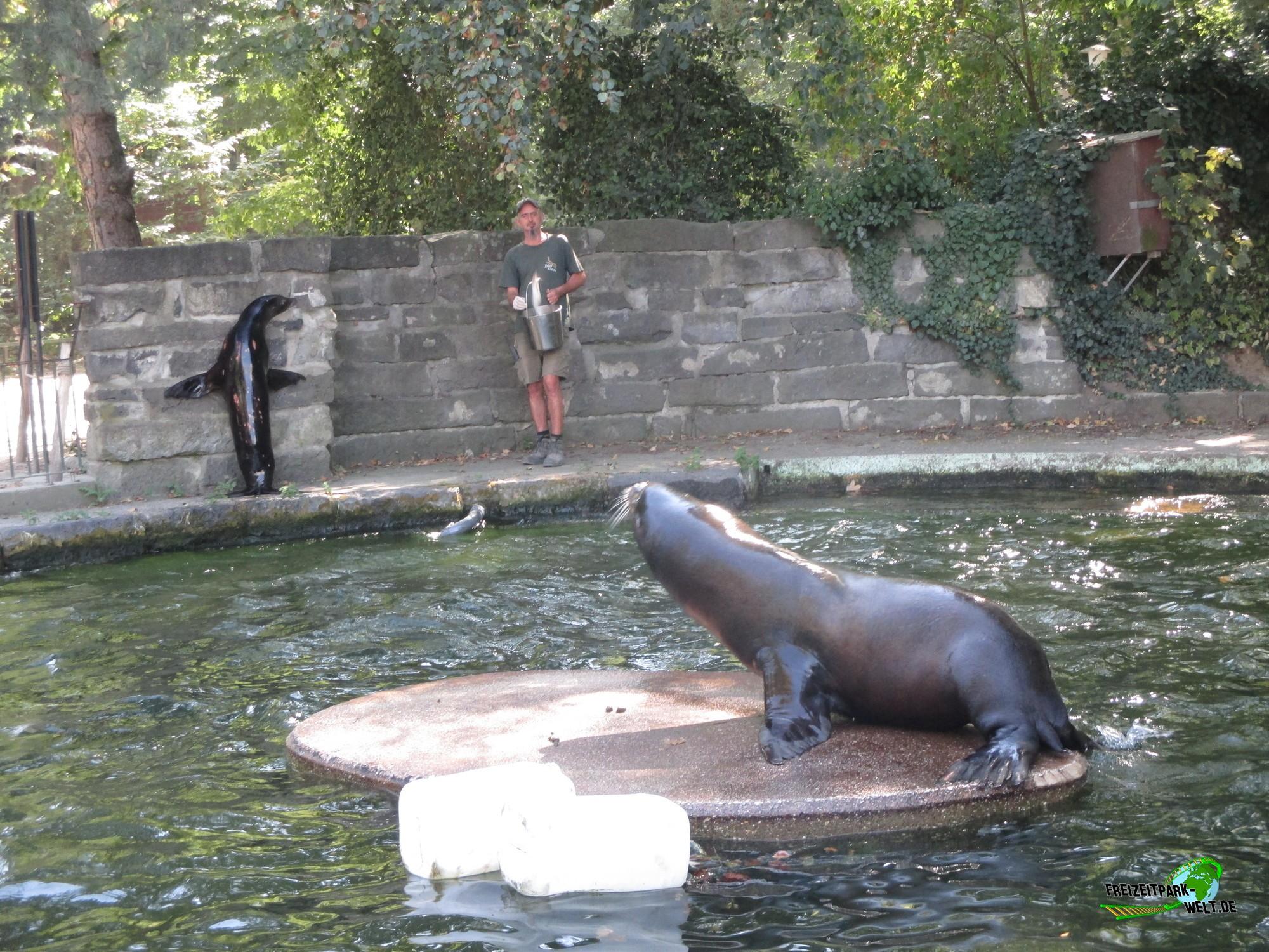 kalifornischer seel we zoo krefeld freizeitpark. Black Bedroom Furniture Sets. Home Design Ideas
