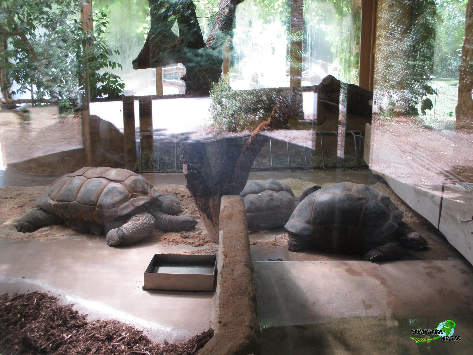 seychellen riesenschildkr te zoo krefeld freizeitpark. Black Bedroom Furniture Sets. Home Design Ideas