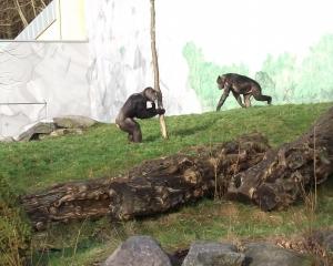 Teaserfoto Zoo Neuwied